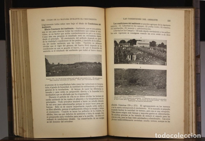 Libros antiguos: 8236 - AVICULTURA PRODUCTIVA. HARRY R. LEWIS. EDIT. J. B. LIPPINCOTT COMPANY. S/F. - Foto 3 - 68239769