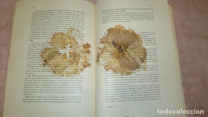 Libros antiguos: LA ANTIGUEDAD DEL HOMBRE EN LA PLATA,FLORENTINO AMEGHINO - Foto 10 - 69427997