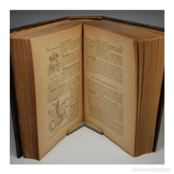 Libros antiguos: GUIA DEL JARDINERO Y ARBOLISTA (1885) - BALBINO CORTÉS Y MORALES - Foto 3 - 58128000