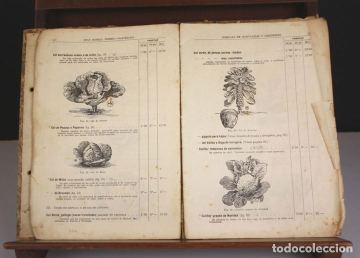 Libros antiguos: 8330 - GUÍA DEL HORTICULTOR. JUAN NONELLS FEBRÉS. SIGLO XX. - Foto 4 - 73982379