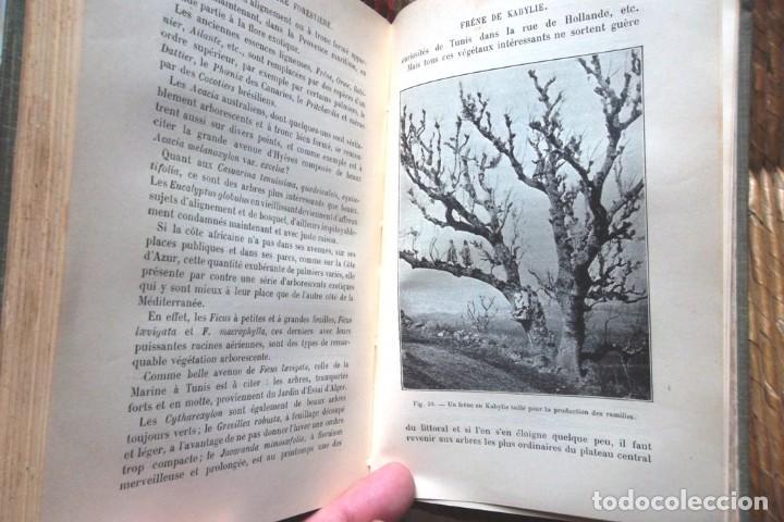 Libros antiguos: Encyclopédie Agricole: Cultures du Midi, de l'Algérie et de la Tunisie Rivière et Lecq 1906 TBE - Foto 3 - 75929675