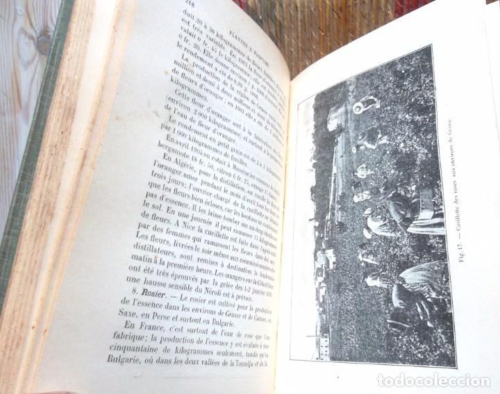 Libros antiguos: Encyclopédie Agricole: Cultures du Midi, de l'Algérie et de la Tunisie Rivière et Lecq 1906 TBE - Foto 4 - 75929675
