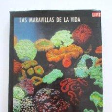 Libros antiguos: LAS MARAVILLAS DE LA VIDA, LIFE, LIBRO DE LOS 60, DE GRAN FORMATO CON IMPRESIONANTES ILUSTRACIONES. Lote 81246036