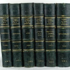 Libros antiguos: LA VIDA DE LOS ANIMALES-DR.A.E.BREHM-ED.A.RIUDOR Y CªEDITORES 1880-1883-TOMOS 1-6. Lote 84024928