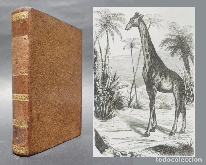 1847 - BUFFON - HISTORIA NATURAL LOS CUADRUPEDOS (Libros Antiguos, Raros y Curiosos - Ciencias, Manuales y Oficios - Bilogía y Botánica)