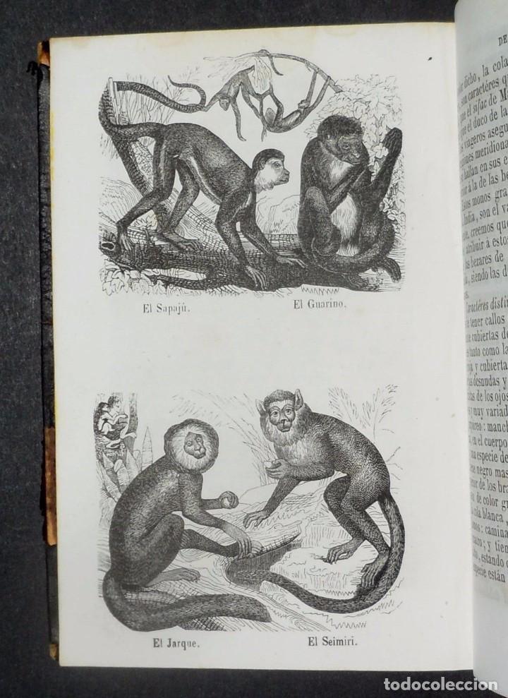 Libros antiguos: 1847 - Buffon - Historia natural los cuadrupedos - Foto 4 - 90425344