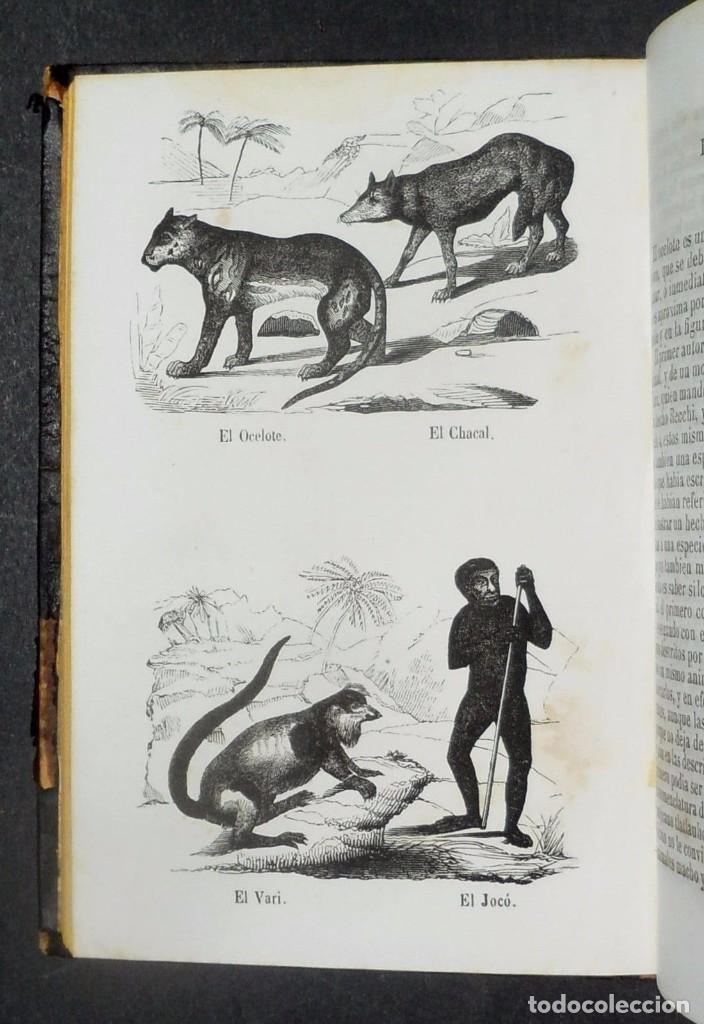 Libros antiguos: 1847 - Buffon - Historia natural los cuadrupedos - Foto 5 - 90425344