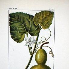 Libros antiguos: 1827 - FLORA PINTORESCA - MEDICINAL - ILUSTRADO - COLONIAS ESPAÑOLAS, FRANCESAS... - FACSÍMIL -T.V. Lote 90787765