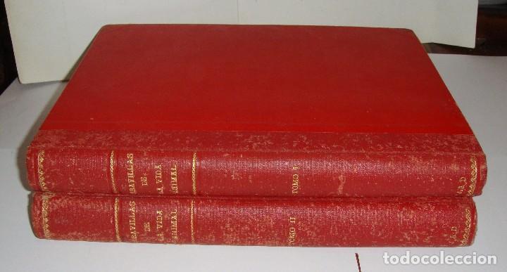 MARAVILLAS DE LA VIDA ANIMAL. J. A. HAMMERTON. LLENO DE ILUSTRACIONES. (Libros Antiguos, Raros y Curiosos - Ciencias, Manuales y Oficios - Bilogía y Botánica)