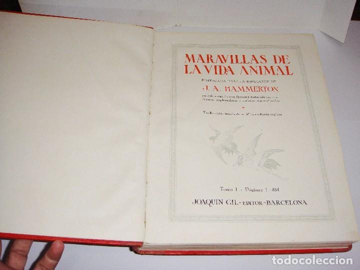 Libros antiguos: Maravillas de la Vida Animal. J. A. Hammerton. Lleno de ilustraciones. - Foto 2 - 94067005