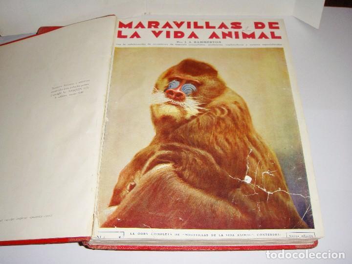 Libros antiguos: Maravillas de la Vida Animal. J. A. Hammerton. Lleno de ilustraciones. - Foto 3 - 94067005