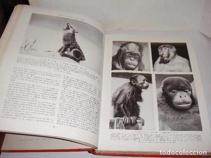 Libros antiguos: Maravillas de la Vida Animal. J. A. Hammerton. Lleno de ilustraciones. - Foto 4 - 94067005
