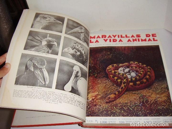 Libros antiguos: Maravillas de la Vida Animal. J. A. Hammerton. Lleno de ilustraciones. - Foto 5 - 94067005