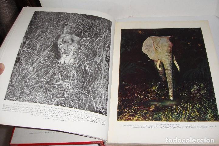 Libros antiguos: Maravillas de la Vida Animal. J. A. Hammerton. Lleno de ilustraciones. - Foto 6 - 94067005