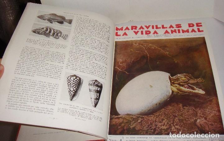 Libros antiguos: Maravillas de la Vida Animal. J. A. Hammerton. Lleno de ilustraciones. - Foto 7 - 94067005