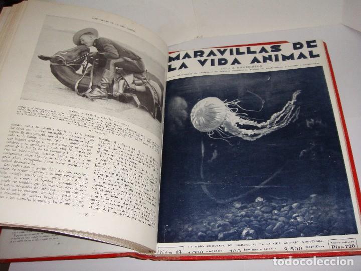 Libros antiguos: Maravillas de la Vida Animal. J. A. Hammerton. Lleno de ilustraciones. - Foto 8 - 94067005