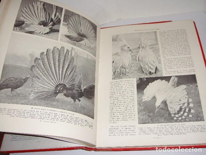 Libros antiguos: Maravillas de la Vida Animal. J. A. Hammerton. Lleno de ilustraciones. - Foto 9 - 94067005