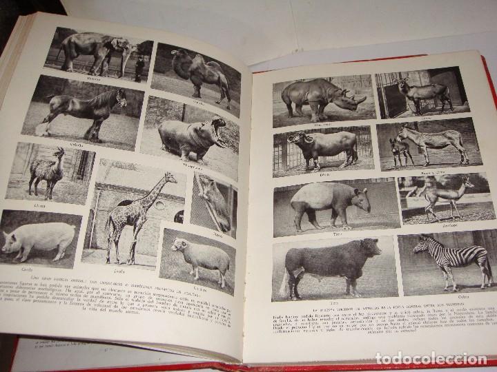 Libros antiguos: Maravillas de la Vida Animal. J. A. Hammerton. Lleno de ilustraciones. - Foto 10 - 94067005