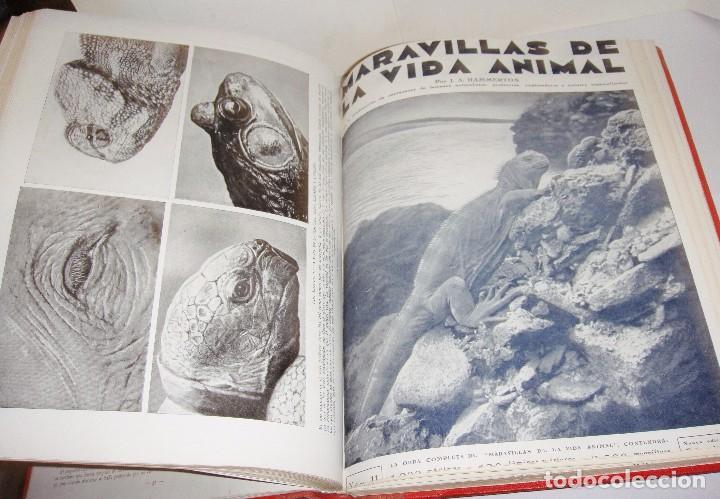 Libros antiguos: Maravillas de la Vida Animal. J. A. Hammerton. Lleno de ilustraciones. - Foto 11 - 94067005