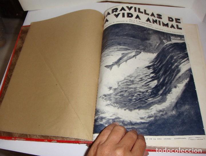 Libros antiguos: Maravillas de la Vida Animal. J. A. Hammerton. Lleno de ilustraciones. - Foto 12 - 94067005