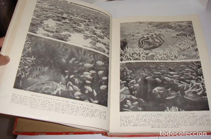 Libros antiguos: Maravillas de la Vida Animal. J. A. Hammerton. Lleno de ilustraciones. - Foto 13 - 94067005