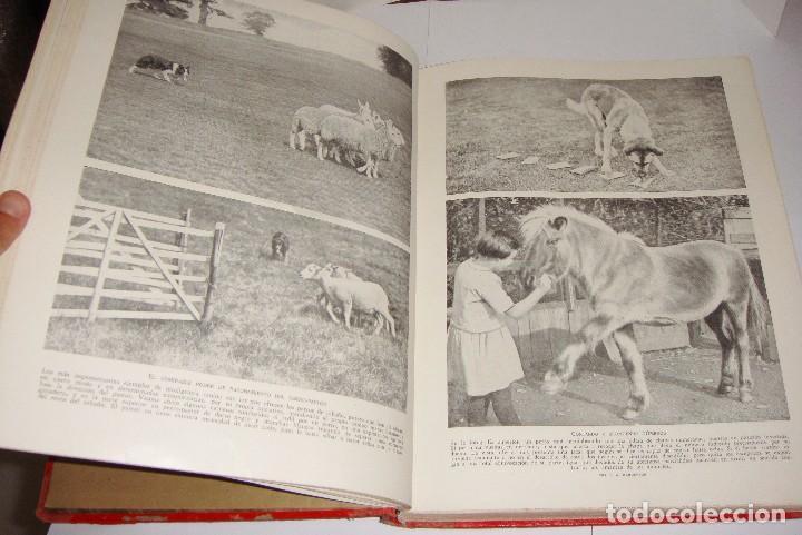 Libros antiguos: Maravillas de la Vida Animal. J. A. Hammerton. Lleno de ilustraciones. - Foto 14 - 94067005