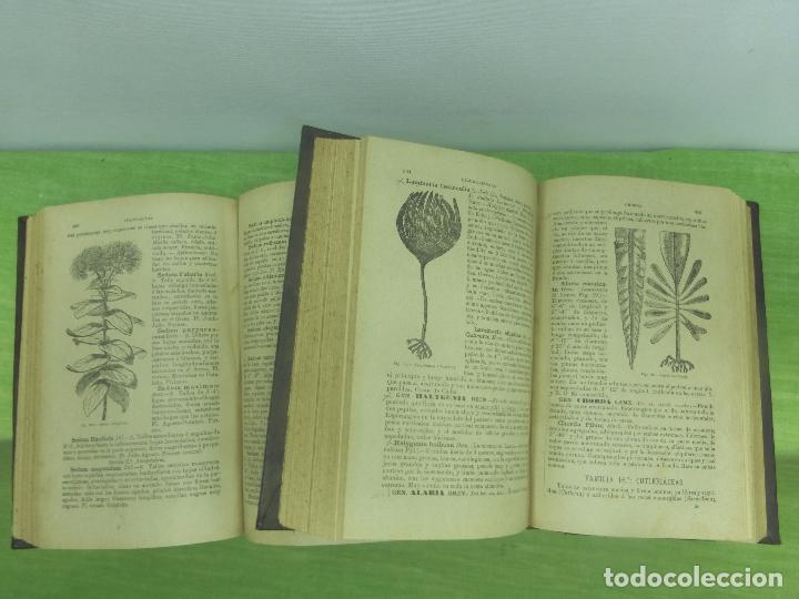 Botánica Descriptiva-compendio De La Flora Espa