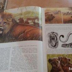 Libros antiguos: LA VIDA SECRETA DE LOS ANIMALES EN LA SABANA. Lote 94806255