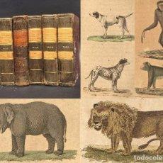 Libros antiguos: 1841 - HISTORIA DE LOS CUADRUPEDOS - 12 TOMOS EN 6 LIBROS - DECENAS DE GRABADOS COLOREADOS. Lote 95806503