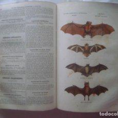 Libros antiguos: LIBRERIA GHOTICA. BUFFON. MUSEO PINTORESCO DE HISTORIA NATURAL. 1852. FOLIO. 2T. GRABADOS ILUMINADOS. Lote 97443567