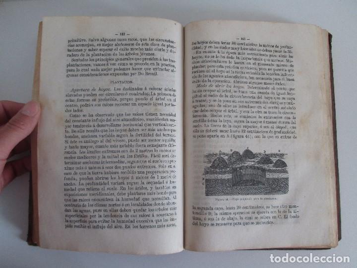 Libros antiguos: TRATADO COMPLETO DEL CULTIVO DE ARBOLES Y ARBUSTOS FRUTALES. BUENAVENTURA ARAGO. 1874 - Foto 15 - 98701191