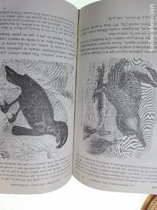 Libros antiguos: LA DESCENDENCIA DEL HOMBRE Y LA SELECCIÓN EN RELACION AL SEXO - CHARLES DARWIN - MADRID - 1885 - - Foto 7 - 101275599