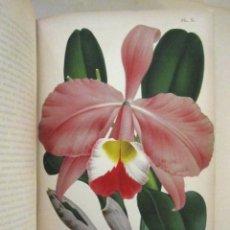 Libros antiguos: ESPECTACULAR LIBRO ILUSTRADO SOBRE ORQUÍDEAS (1894): LE LIVRE DES ORCHIDEES.. Lote 101277063
