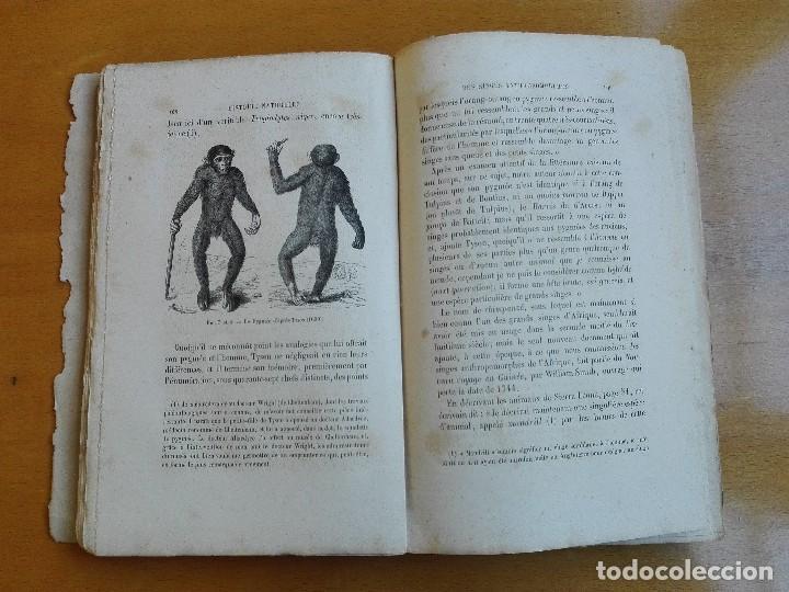 Libros antiguos: De la place de l'homme dans la nature. Huxley, Th[omas] H[enry] 1868 - Foto 5 - 107884983