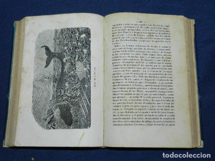 Libros antiguos: (MF) JOSE MONLAU - COMPENDIA DE HISTORIA NATURAL 1867 , MINERALOGIA, ZOOLOGIA Y BOTANICA , 3 VOLS - Foto 7 - 108053771