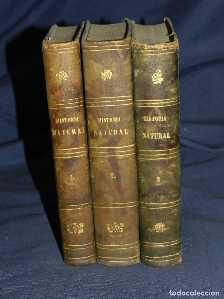 Libros antiguos: (MF) JOSE MONLAU - COMPENDIA DE HISTORIA NATURAL 1867 , MINERALOGIA, ZOOLOGIA Y BOTANICA , 3 VOLS - Foto 11 - 108053771
