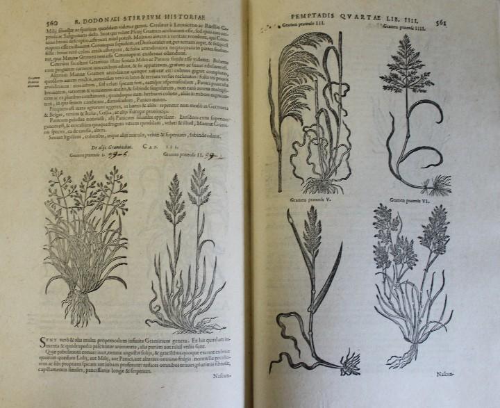 Libros antiguos: REMBERTI DODONAEI MECHLINIENSIS MEDICI CAESAREI STIRPIUM HISTORIAE PEMPTADES SEX SIVE LIBRI XXX. Var - Foto 3 - 109023842