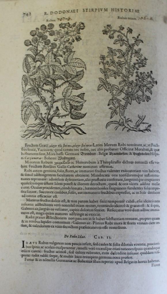 Libros antiguos: REMBERTI DODONAEI MECHLINIENSIS MEDICI CAESAREI STIRPIUM HISTORIAE PEMPTADES SEX SIVE LIBRI XXX. Var - Foto 4 - 109023842