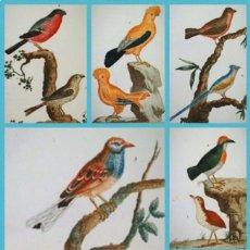 Libros antiguos: AÑO 1800 - BUFFON - PÁJAROS - 20 LÁMINAS GRABADAS.. Lote 109062255
