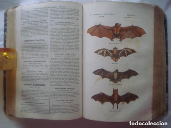 LIBRERIA GHOTICA. BUFFON. MUSEO PINTORESCO DE HISTORIA NATURAL. 1852. FOLIO. 2T. GRABADOS ILUMINADOS (Libros Antiguos, Raros y Curiosos - Ciencias, Manuales y Oficios - Bilogía y Botánica)