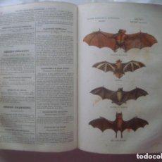 Libros antiguos: LIBRERIA GHOTICA. BUFFON. MUSEO PINTORESCO DE HISTORIA NATURAL. 1852. FOLIO. 2T. GRABADOS ILUMINADOS. Lote 110342159