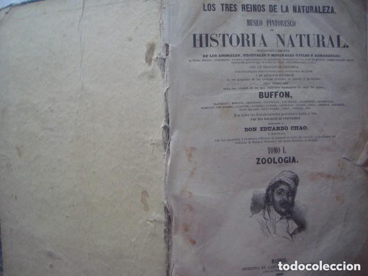 Libros antiguos: LIBRERIA GHOTICA. BUFFON. MUSEO PINTORESCO DE HISTORIA NATURAL. 1852. FOLIO. 2T. GRABADOS ILUMINADOS - Foto 3 - 110342159