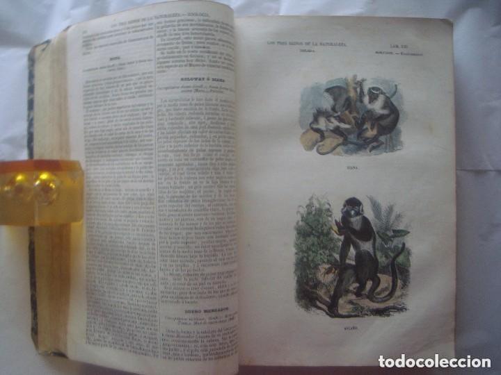 Libros antiguos: LIBRERIA GHOTICA. BUFFON. MUSEO PINTORESCO DE HISTORIA NATURAL. 1852. FOLIO. 2T. GRABADOS ILUMINADOS - Foto 4 - 110342159