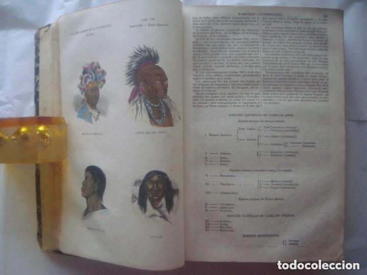 Libros antiguos: LIBRERIA GHOTICA. BUFFON. MUSEO PINTORESCO DE HISTORIA NATURAL. 1852. FOLIO. 2T. GRABADOS ILUMINADOS - Foto 5 - 110342159