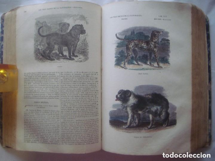 Libros antiguos: LIBRERIA GHOTICA. BUFFON. MUSEO PINTORESCO DE HISTORIA NATURAL. 1852. FOLIO. 2T. GRABADOS ILUMINADOS - Foto 6 - 110342159