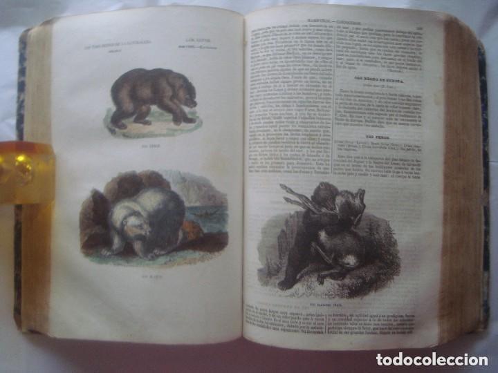 Libros antiguos: LIBRERIA GHOTICA. BUFFON. MUSEO PINTORESCO DE HISTORIA NATURAL. 1852. FOLIO. 2T. GRABADOS ILUMINADOS - Foto 7 - 110342159