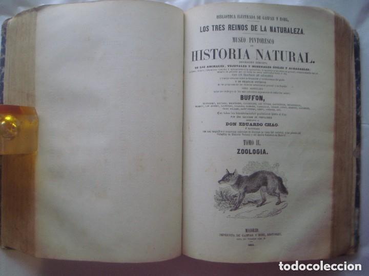 Libros antiguos: LIBRERIA GHOTICA. BUFFON. MUSEO PINTORESCO DE HISTORIA NATURAL. 1852. FOLIO. 2T. GRABADOS ILUMINADOS - Foto 9 - 110342159