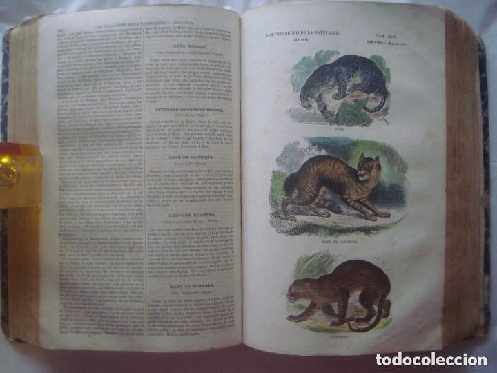 Libros antiguos: LIBRERIA GHOTICA. BUFFON. MUSEO PINTORESCO DE HISTORIA NATURAL. 1852. FOLIO. 2T. GRABADOS ILUMINADOS - Foto 10 - 110342159