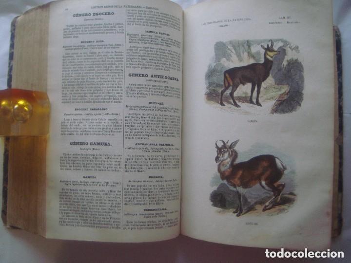 Libros antiguos: LIBRERIA GHOTICA. BUFFON. MUSEO PINTORESCO DE HISTORIA NATURAL. 1852. FOLIO. 2T. GRABADOS ILUMINADOS - Foto 11 - 110342159