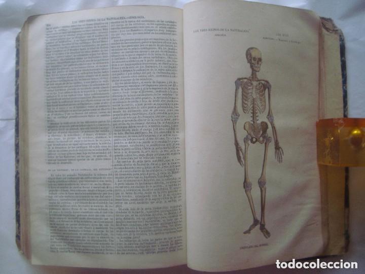 Libros antiguos: LIBRERIA GHOTICA. BUFFON. MUSEO PINTORESCO DE HISTORIA NATURAL. 1852. FOLIO. 2T. GRABADOS ILUMINADOS - Foto 13 - 110342159
